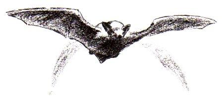 rhpipistrellevolantamsoleilbernex dans la vie
