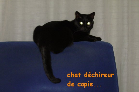 chatte