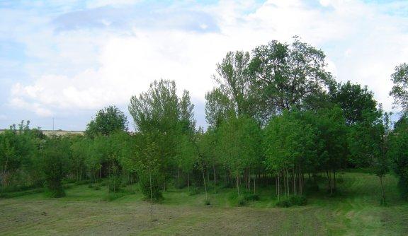 forêt frênes