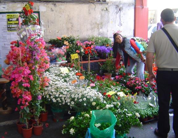 des fleurs B bougainvilliers