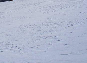 neige raquettes 1045